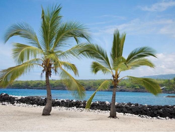 Lumeria Palm Trees